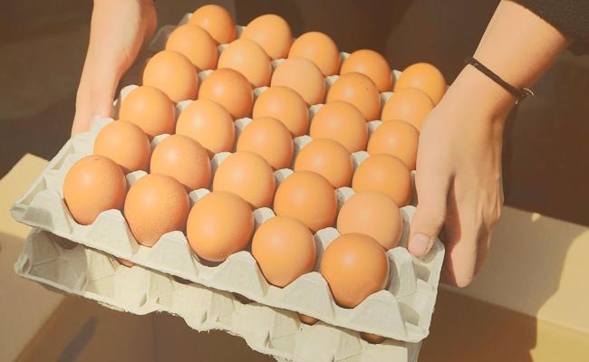 propiedades y beneficios del huevo