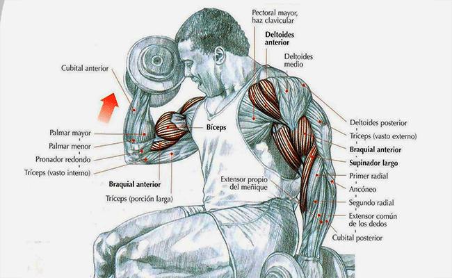curl bíceps