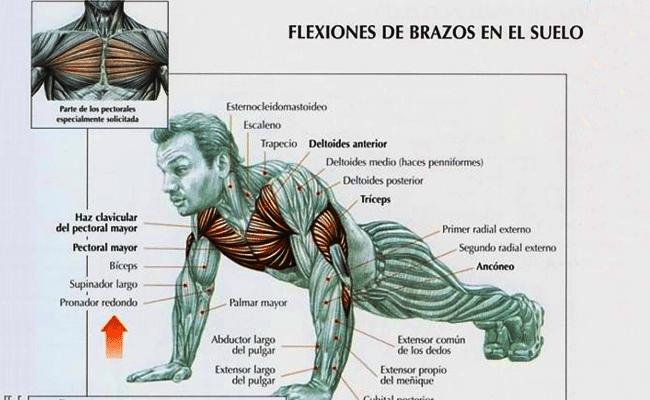 Flexiones de pecho